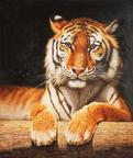 Oil Painting Zoo