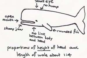 Rough Sketch Whale